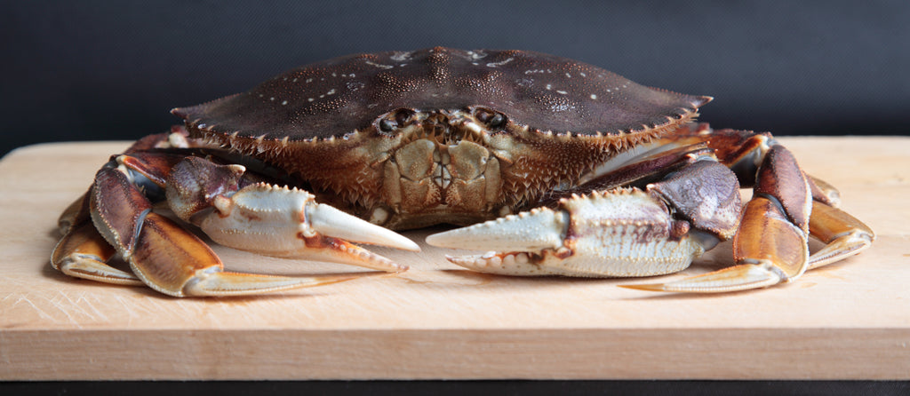 Dungeness Crab Special