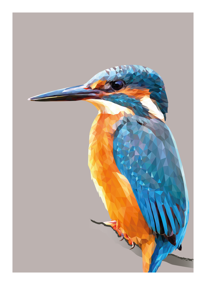 Kingfisher |  Feather