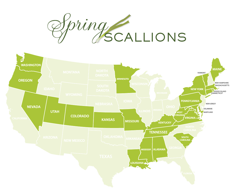 Jessica Haas Designs- Where to find scallions locally in spring