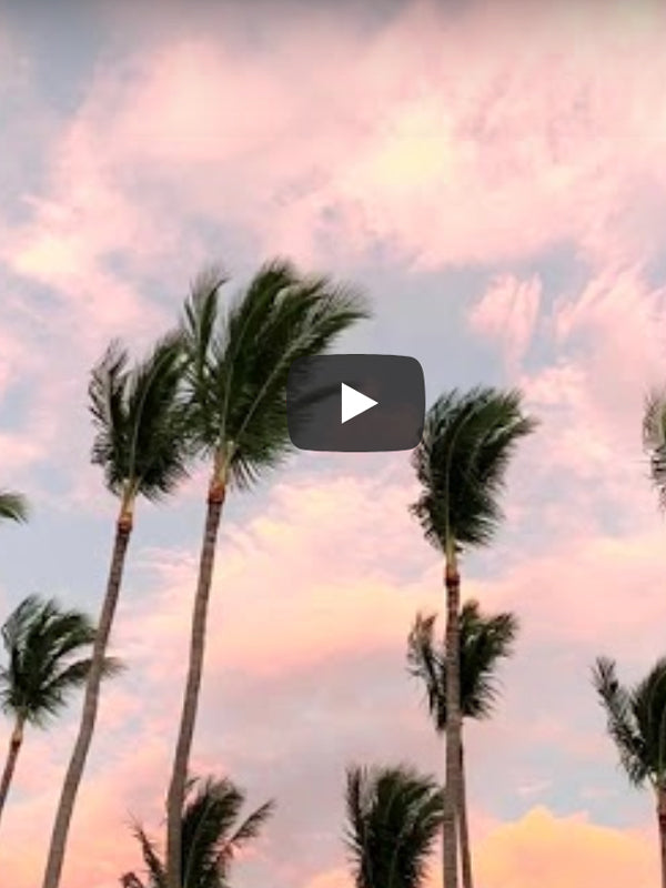 Behind the scenes video of palm trees sunset sky photo print in Tamarindo Costa Rica. Photographed by Kristen M. Brown of Samba to the Sea for The Sunset Shop.