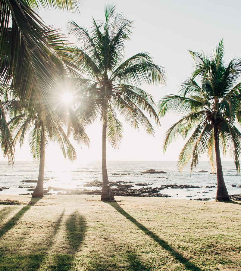 Palm trees overlooking the Pacific Ocean in Costa Rica. Fine art beach photographing print Photographed by Kristen M. Brown, Samba to the Sea for The Sunset Shop.