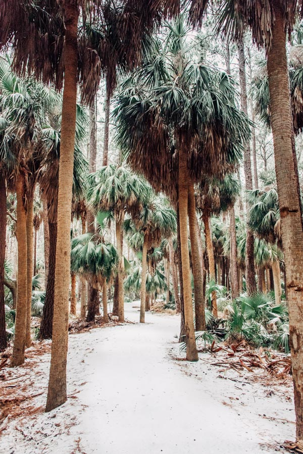 Palmetto Palm trees covered in snow in Savannah Georgia. Art pictures photographed by Kristen M. Brown, Samba to the Sea for The Sunset Shop.