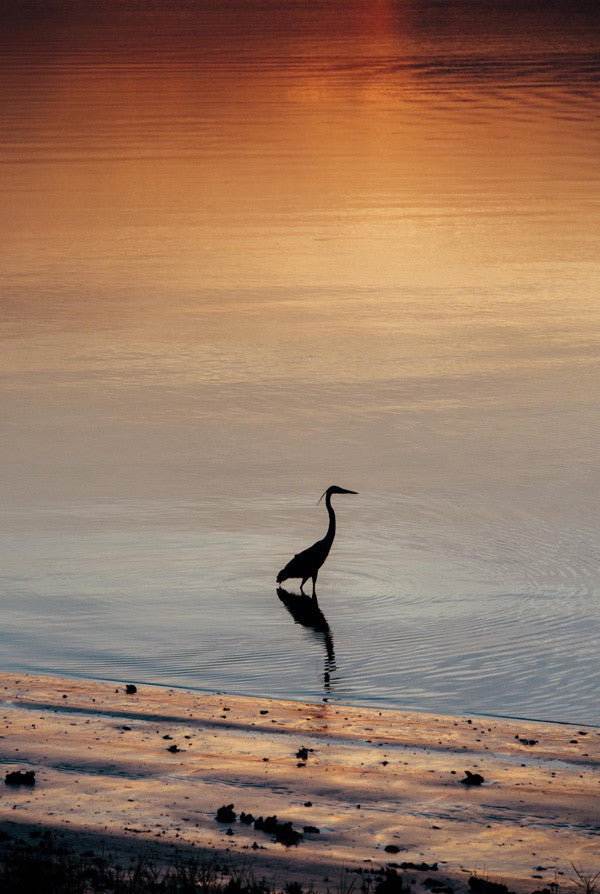 Heron fishing in Moon River during sunset in Savannah, Georgia. Photographed by Kristen M. Brown, Samba to the Sea for The Sunset Shop.