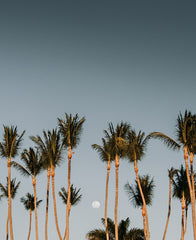 Full moon rising over palm trees in Tamarindo Costa Rica. Photographed by Kristen M. Brown, Samba to the Sea for The Sunset Shop.