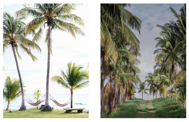 Palm tree photo prints by Kristen M. Brown of Samba to the Sea for The Sunset Shop.