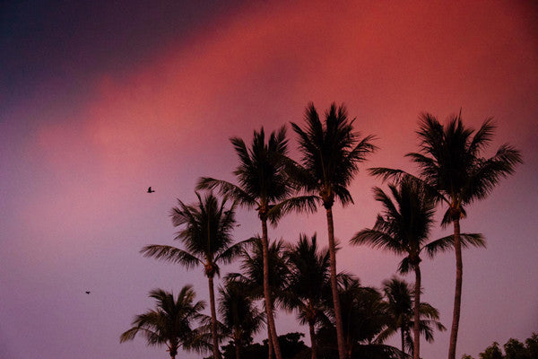 Palm trees against a magenta pink sunset sky in Costa Rica. Photographed by Kristen M. Brown, Samba to the Sea at The Sunset Shop.
