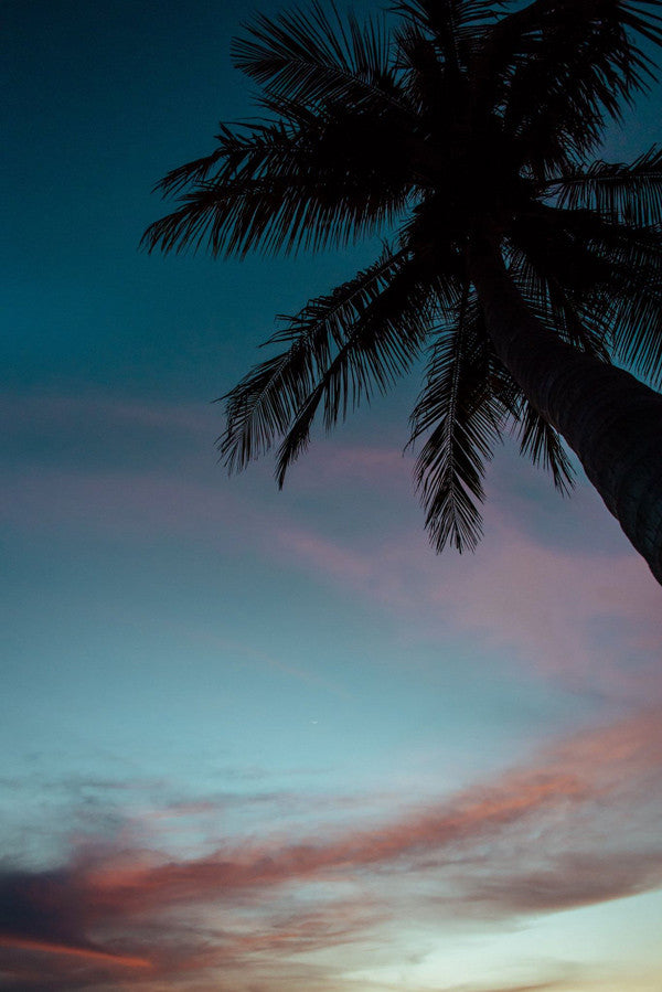 Palm tree sunset in Tamarindo, Costa Rica. Photographed by Kristen M. Brown, Samba to the Sea. Sunset print at The Sunset Shop.