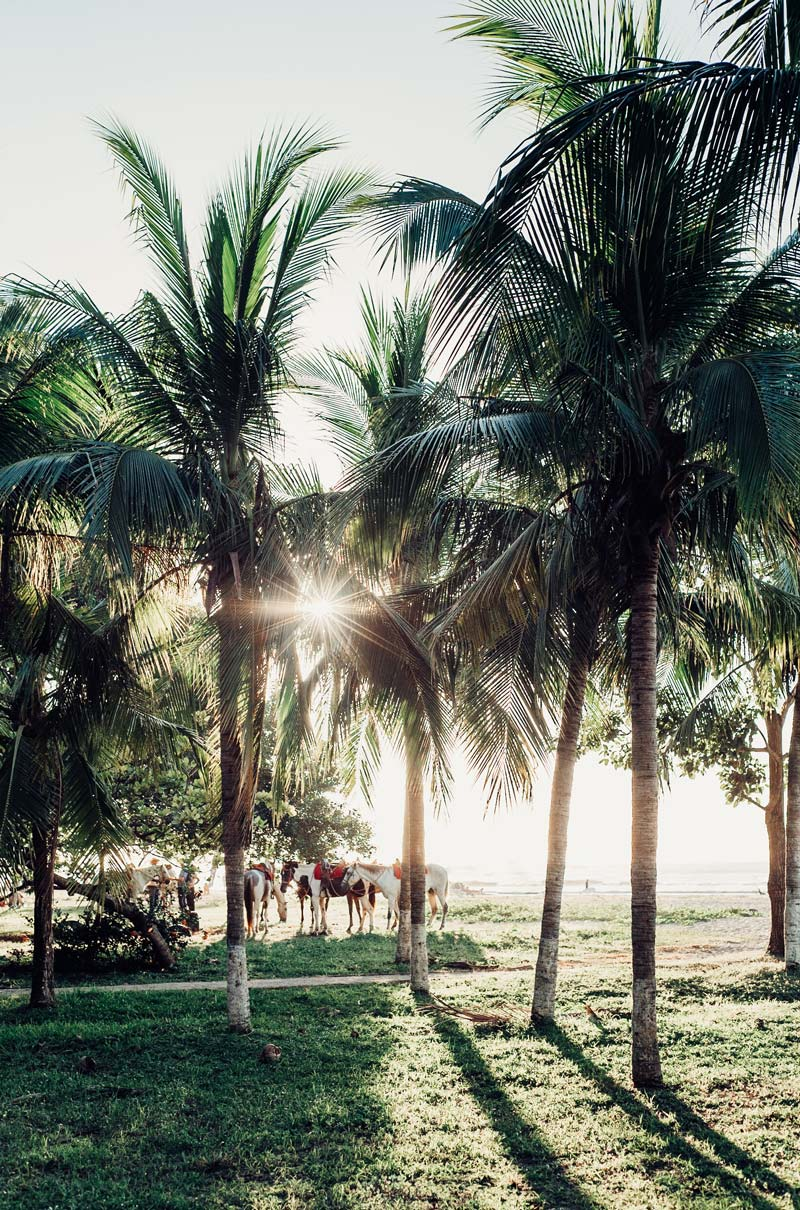 Palm trees and horses in Costa Rica. Fine art beach photographing print Photographed by Kristen M. Brown, Samba to the Sea for The Sunset Shop.