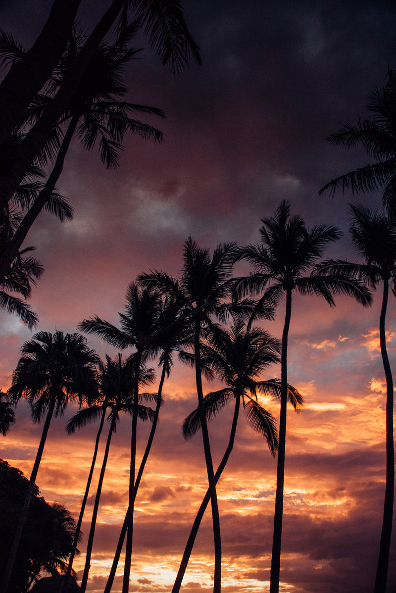 Palm tree sunset in Costa Rica. Photographed by Kristen M. Brown, Samba to the Sea for The Sunset Shop.