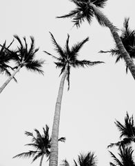 Black and white image of palm trees in Costa Rica. Image by Samba to the Sea at The Sunset Shop.