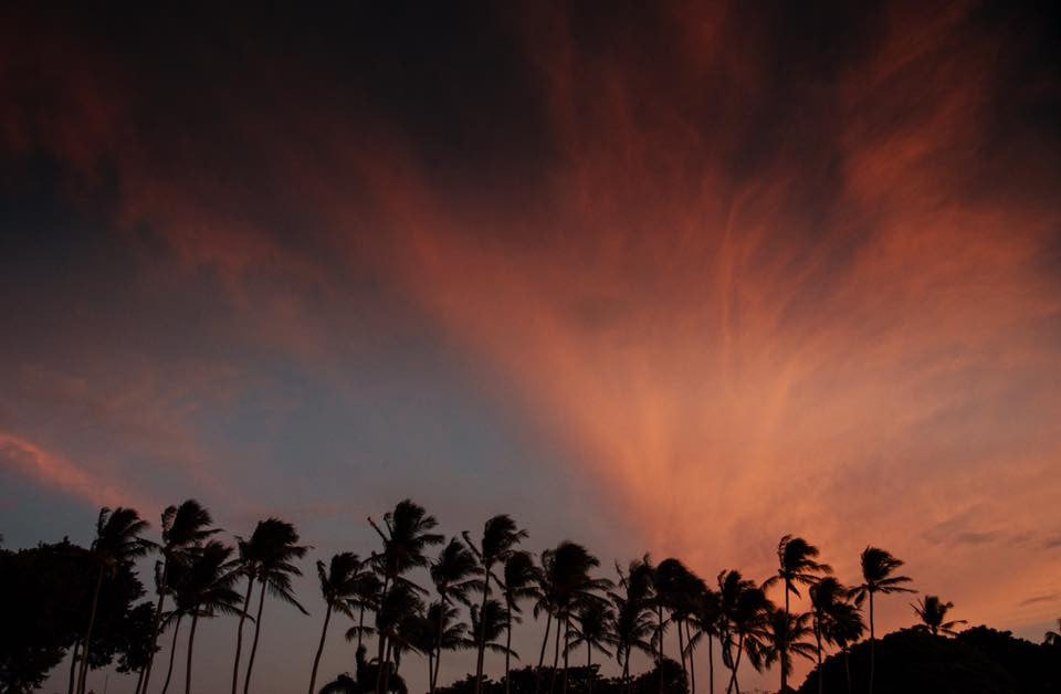 Palm trees silhouetted against pink sunset clouds in Tamarindo, Costa Rica. Photographed by Kristen M. Brown, Samba to the Sea.