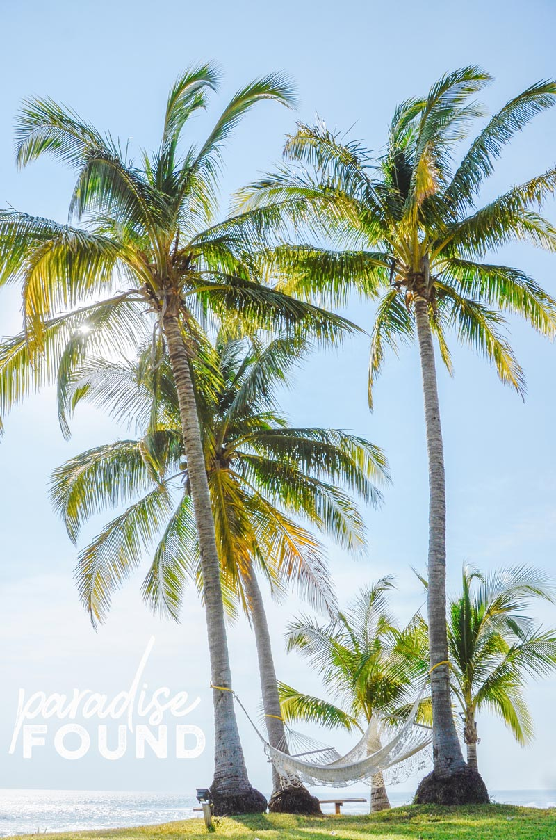 Palm trees overlooking the ocean in Costa Rica. Photographed by Kristen M. Brown, Samba to the Sea for The Sunset Shop.