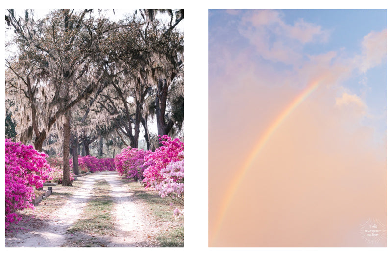 Rainbow photo prints and flower photos by Kristen M. Brown of Samba to the Sea for The Sunset Shop.
