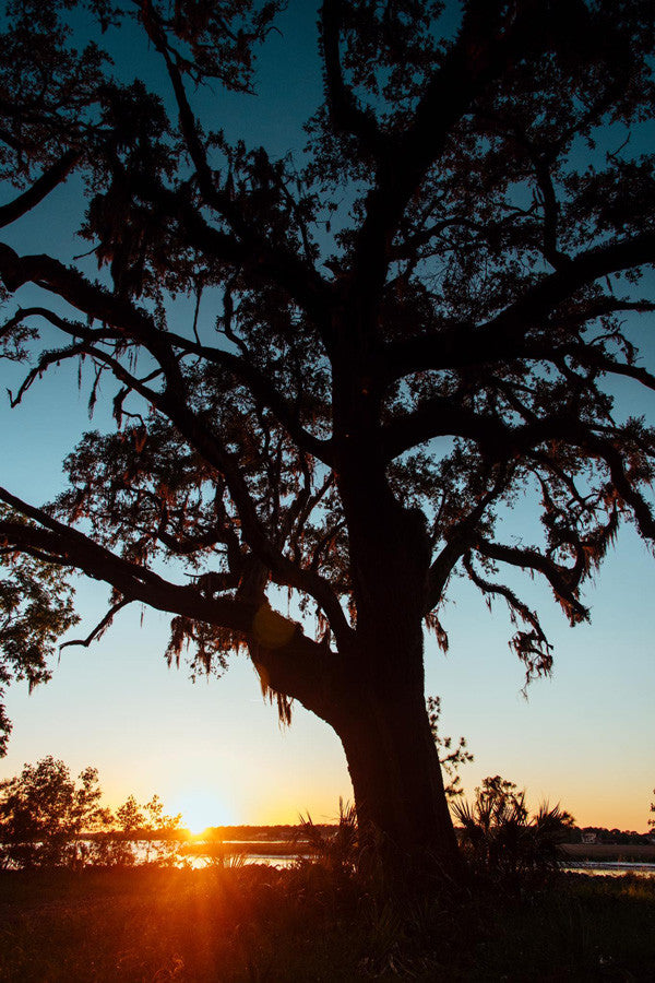 Oak Tree sunset in Savannah, Georgia. Photographed by Kristen M. Brown, Samba to the Sea at The Sunset Shop.