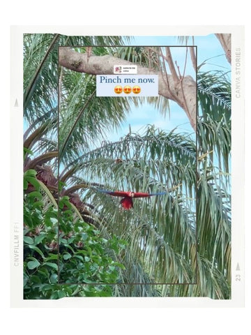 Scarlet macaw flying in Manuel Antonio Costa Rica. What the weather is like in Costa Rica by Samba to the Sea at The Sunset Shop.