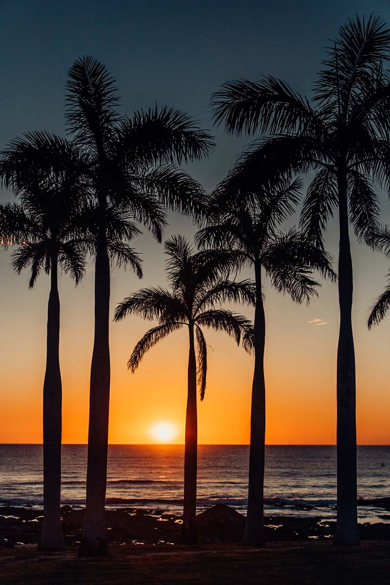 Palm trees overlooking the Pacific Ocean during sunset in Costa Rica. Fine art beach photographing print Photographed by Kristen M. Brown, Samba to the Sea for The Sunset Shop.
