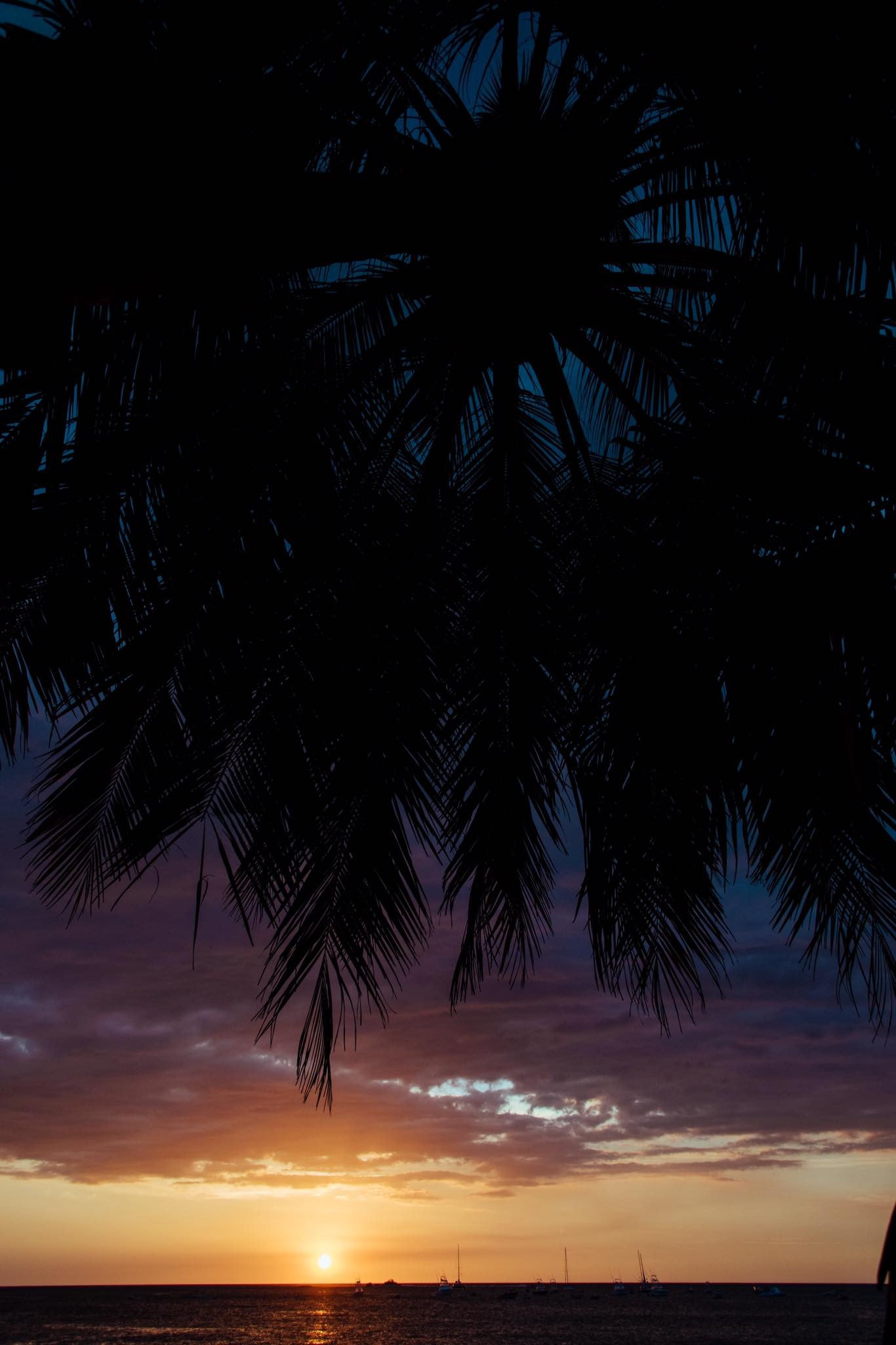 Gorgeous sunset in Tamarindo, Costa Rica seen through a palm tree. Photographed by Kristen M. Brown, Samba to the Sea. Sunset print available at The Sunset Shop.