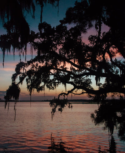 All Dressed Up print by Samba to the Sea at The Sunset Shop. Image of a pastel pink sunset through a live oak tree over Moon River in Savannah, GA.