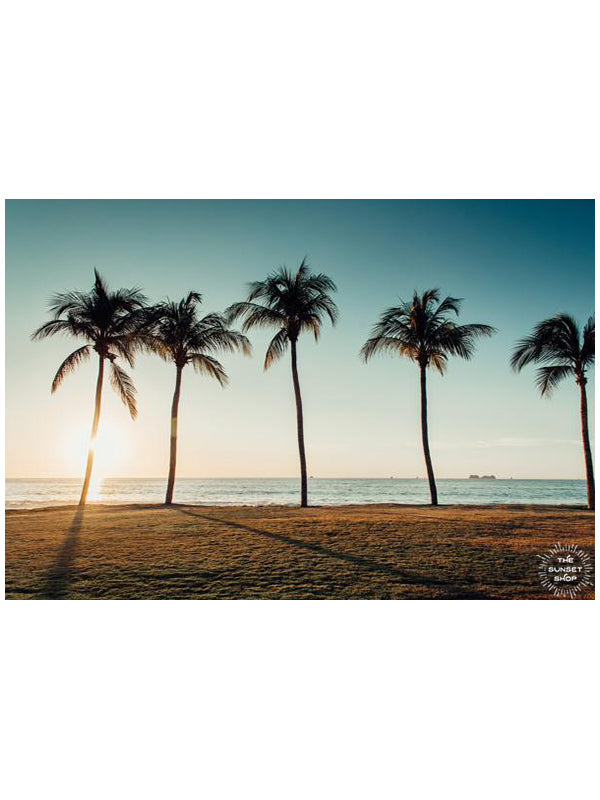 Palm trees at the beach in Costa Rica. Photographed by Samba to the Sea for The Sunset Shop.