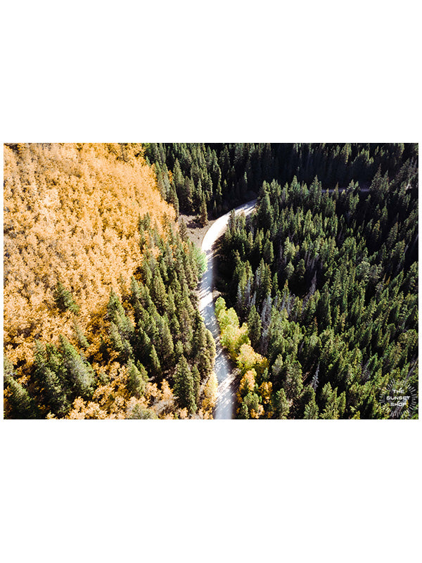 "Aerial image of golden Aspens at Boreas Pass in Breckenridge, Colorado. ""Chasing Gold"" aerial image print by Kristen M. Brown, Samba to the Sea."
