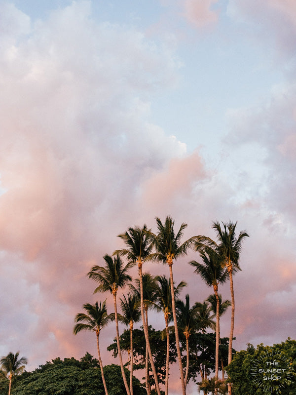 Palm trees swaying in the ocean breeze with a cotton candy pastel sunset sky in Costa Rica. Photographed by Samba to the Sea for The Sunset Shop.