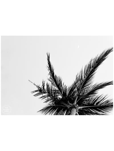 "May you never be too busy to stop and dream under a palm tree. ""Find Me Under the Palms"" black and white palm tree print by Kristen M. Brown of Samba to the Sea for The Sunset Shop."