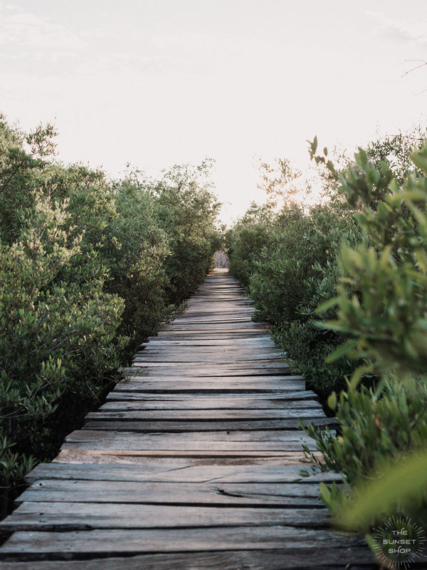 "Because there's quite like taking the scenic route with your bare feet. Now close your eyes and imagine it's you, your surfboard, and your surf buddies walking through this dreamy mangrove boardwalk path to the beach to catch perfect waves in Costa Rica. It's time to go on your next adventure. Mangrove beach boardwalk path print ""Gone Adventuring"" by Samba to the Sea."