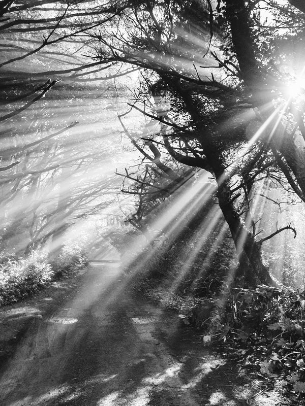 Sun beaming through trees on a beach path on the Oregon Coast. Into the Mystic black and white sun beam beach path print by Samba to the Sea at The Sunset Shop.