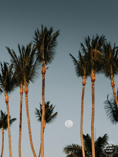 Full Moon Rising over palm trees Tamarindo, Costa Rica. Moon Magic palm tree print by Samba to the Sea at The Sunset Shop.