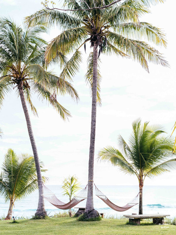 Ocean view hammocks under palm trees in Costa Rica. Beach print at The Sunset Shop by Samba to the Sea.