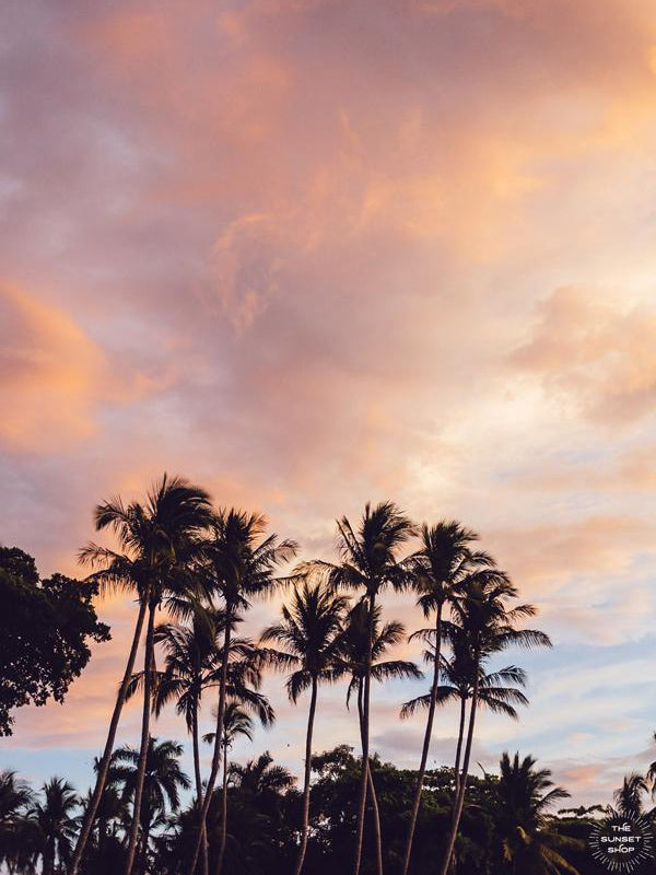 Beautiful palm tree silhouette with a cotton candy pink sunset sky in Costa Rica. Photographed by Samba to the Sea for The Sunset Shop.