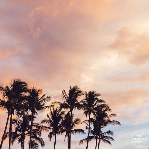 Palm Tree Dreaming - Framed Shelfie Print