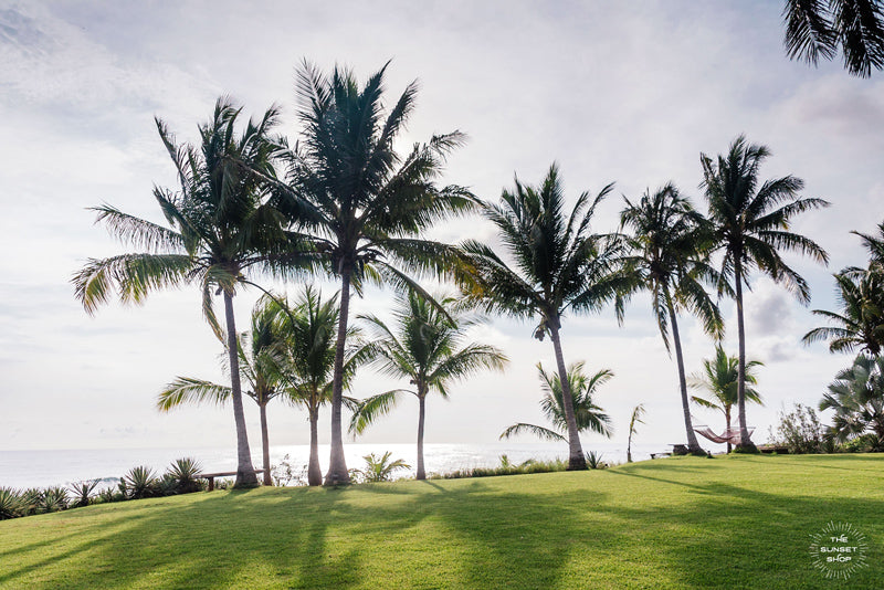 "Palm trees overlooking the ocean in Costa Rica at Playa Junquillal. ""Palm Tree Pura Vidadise"" beach print photograph wall art. Photographed by Samba to the Sea for The Sunset Shop."