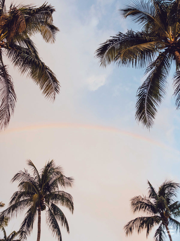 Rainbow and palm trees in a sunrise sky in Miami, Florida. Photographed by Kristen M. Brown of Samba to the Sea, The Sunset Shop.