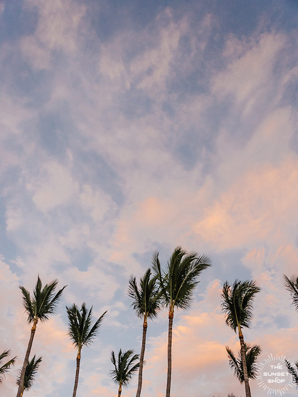 "Palm trees swaying in the ocean breeze with a pastel pink cotton candy sunset sky in Costa Rica. Photographed by Samba to the Sea for The Sunset Shop. ""Palms Palms Palms"" sunset palm tree print."