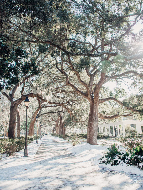 "Snow on Oak trees in Forsyth Park, Savannah. Sprinkle a dusting of snow on Savannah and you get just pure magic. Experience the lowcountry winter wonderland with ""Savannah Snowday"", a super rare snow fall in Savannah, Georgia. Rare as in it had not snowed in Savannah in almost 30 years! Photographed by Kristen M. Brown, Samba to the Sea for The Sunset Shop."