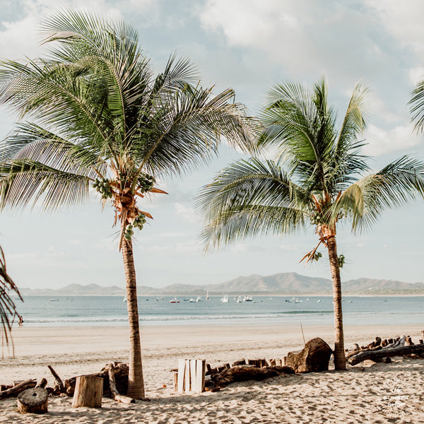 Framed palm trees at the beach shelfie print. One glance at these palm trees at the beach and you can't help but smell the ocean air and feel the warmth of the sun on your skin. Beach palm trees in Costa Rica. Beach print at The Sunset Shop by Samba to the Sea.
