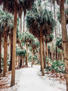 "Snow on wild palm trees in Savannah. Sprinkle a dusting of snow on Savannah and you get just pure magic. Experience the lowcountry winter wonderland with ""Snow Palms"", a super rare snow fall in Savannah, Georgia. Rare as in it had not snowed in Savannah in almost 30 years! Photographed by Kristen M. Brown, Samba to the Sea for The Sunset Shop."
