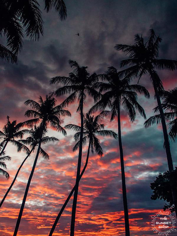Palm tree sunset sky in Costa Rica. Photographed by Samba to the Sea for The Sunset Shop.