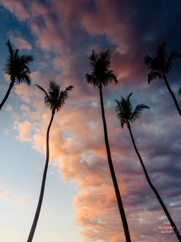 Sunset palm tree silhouette sky in Costa Rica. Photographed by Samba to the Sea for The Sunset Shop.