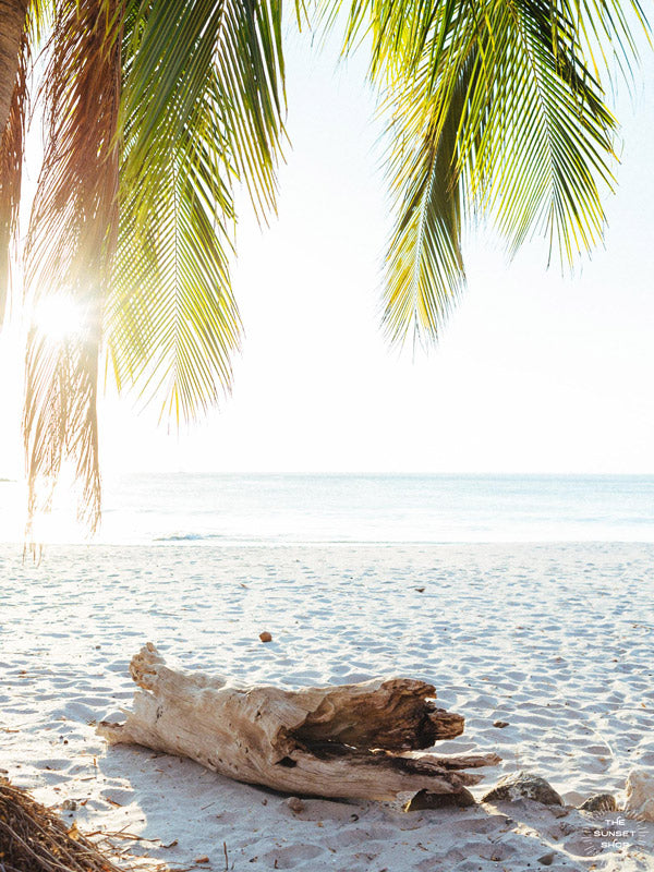 "Beach palm trees and driftwood in Costa Rica. ""Via Paradise"" beach print at The Sunset Shop by Samba to the Sea."