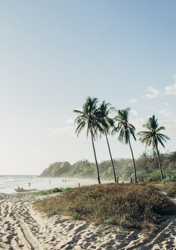 """Palm trees at the beach in Nosara Costa Rica (Playa Guiones). """"Welcome to Pura Vidadise"""" Nosara Costa Rica print photographed by Samba to the Sea for The Sunset Shop."""