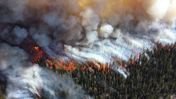 Forest fires, climate change, and grizzlies