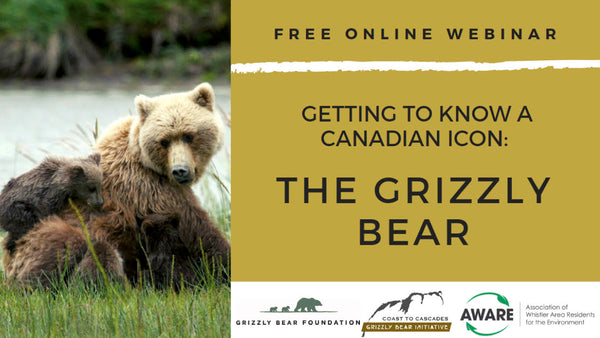 Getting To Know A Canadian Icon: The Grizzly Bear