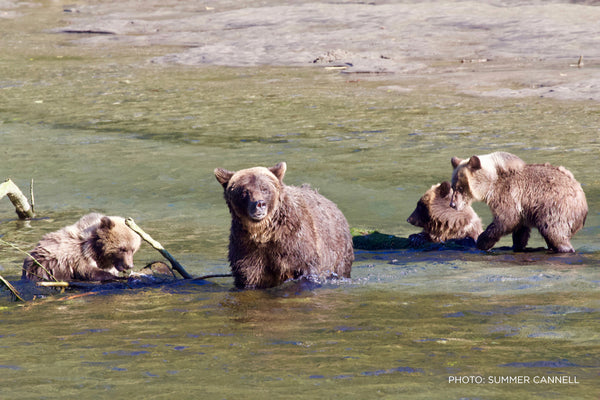 Summer Cannell Mama and Three Cubs