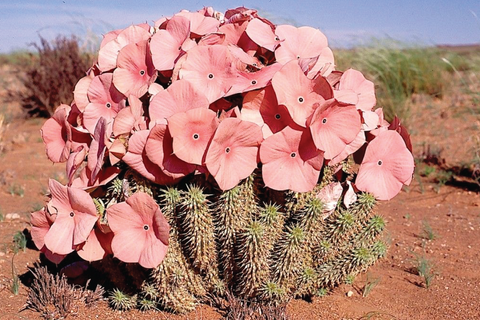 Hoodia Gordonii appetite suppressant