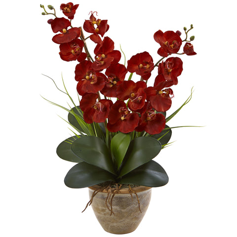 Fall Double Phalaenopsis Orchid Arrangement - foodgles-supermarkets