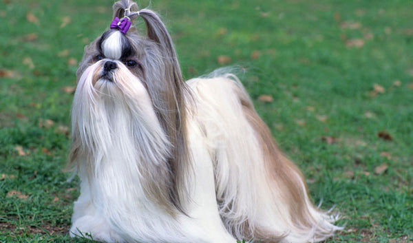 Shih Tzu Gift Ideas