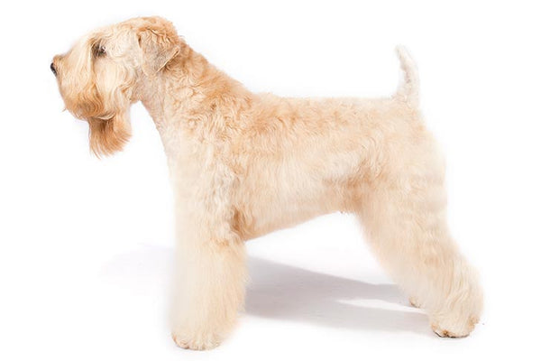 Soft Coated Wheaten Terrier Gift Ideas