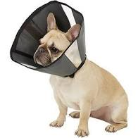 Soft Cone Recovery Collar by ZenPet
